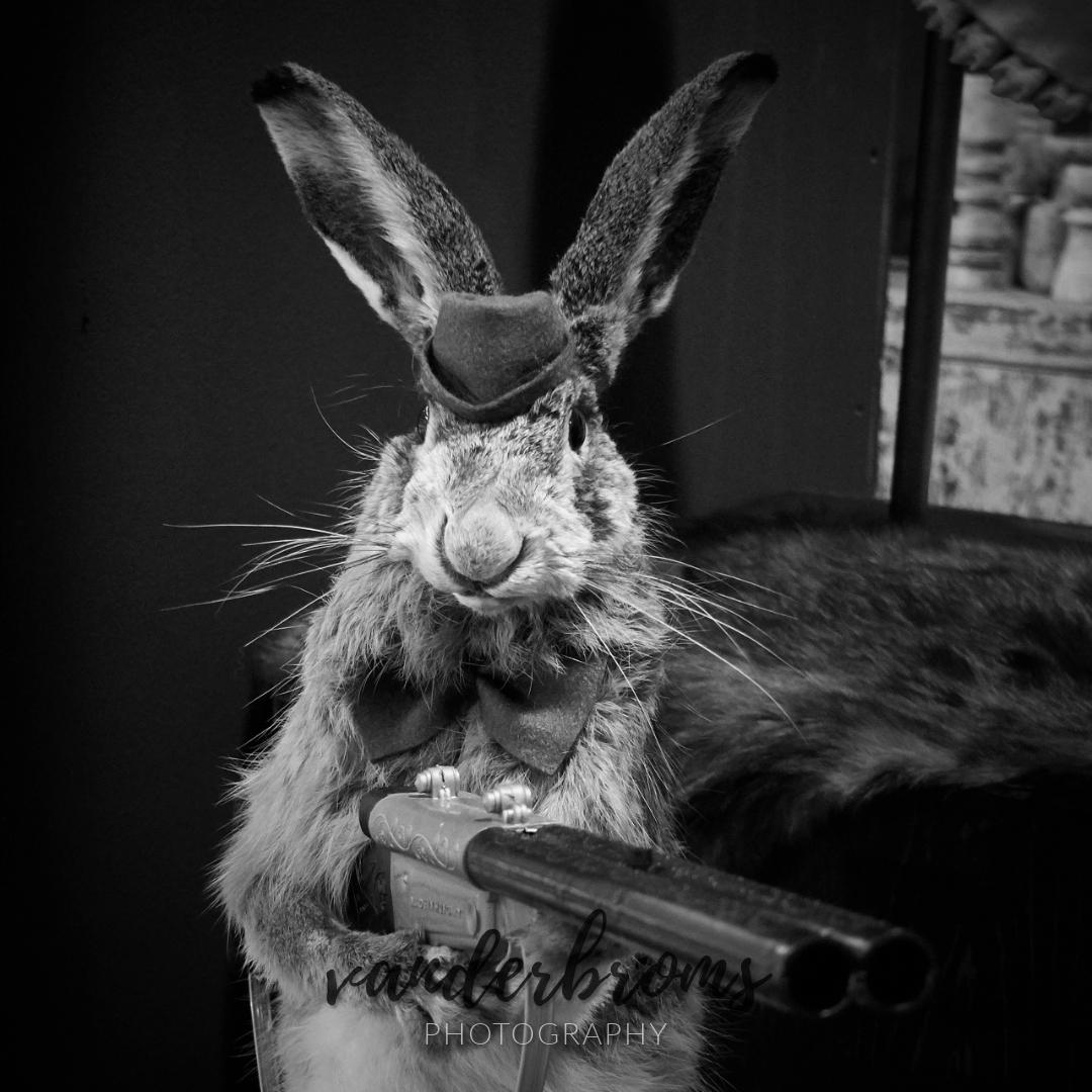 Bunny © vanderbroms
