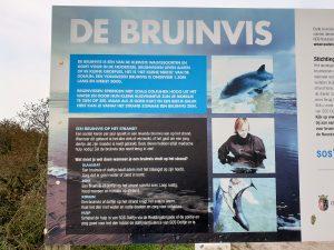 bruinvis vanderbroms photography