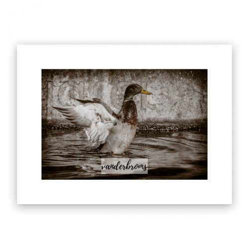 The Duck Fine Art Photography limited edition photo print by vanderbroms photography